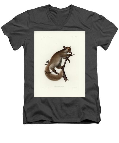 Brown Greater Galago Or Thick-tailed Bushbaby Men's V-Neck T-Shirt by Hugo Troschel and J D L Franz Wagner