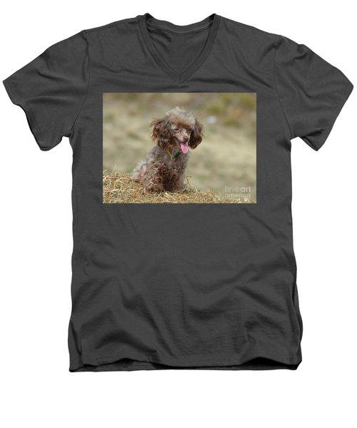 Brown Toy Poodle On Bail Of Hay Men's V-Neck T-Shirt