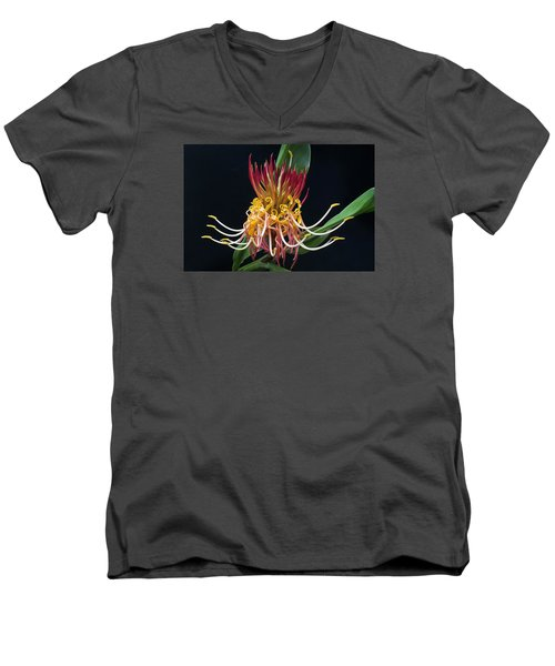 Brownea Macrophylla Tropical Flower Men's V-Neck T-Shirt