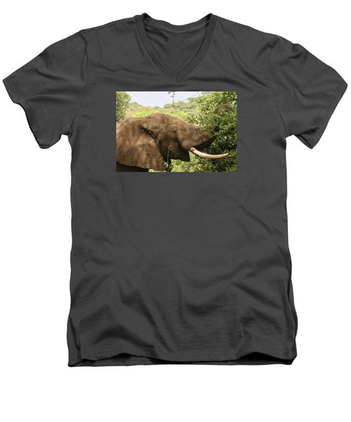 Men's V-Neck T-Shirt featuring the photograph Browsing Elephant by Gary Hall