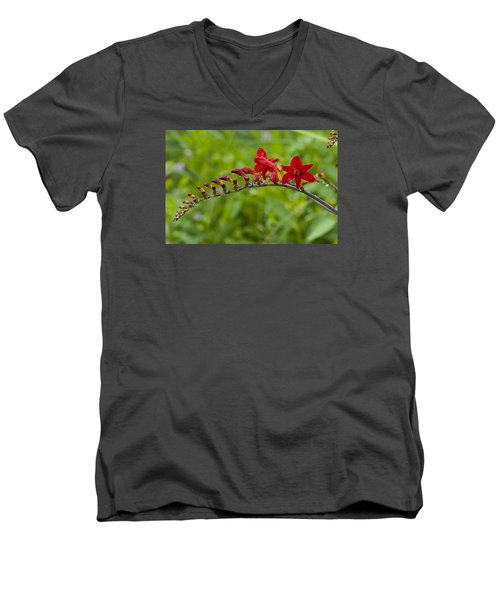 Budding Red Men's V-Neck T-Shirt