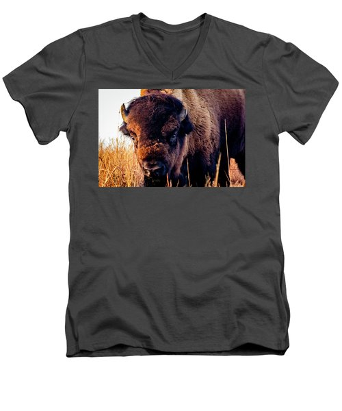 Buffalo Face Men's V-Neck T-Shirt