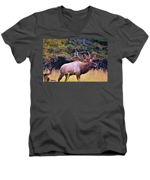 Bull Calling His Herd Men's V-Neck T-Shirt