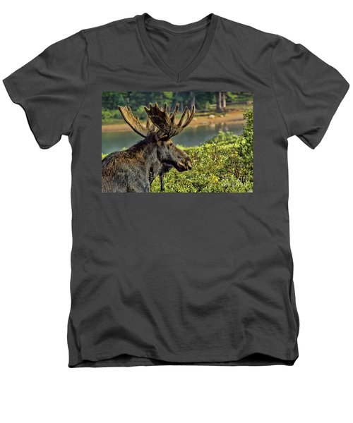 Bull Moose Men's V-Neck T-Shirt by Steven Parker