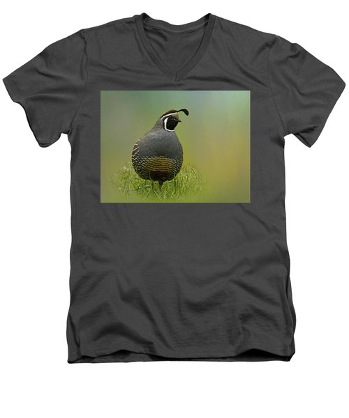 California Quail - 365-42 Men's V-Neck T-Shirt by Inge Riis McDonald