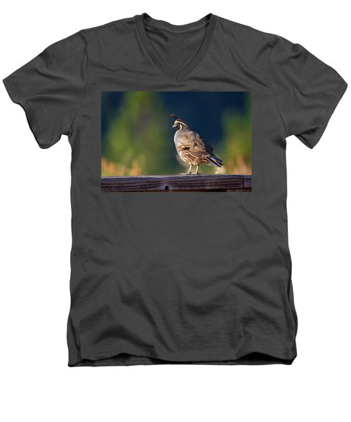 California Quail Men's V-Neck T-Shirt