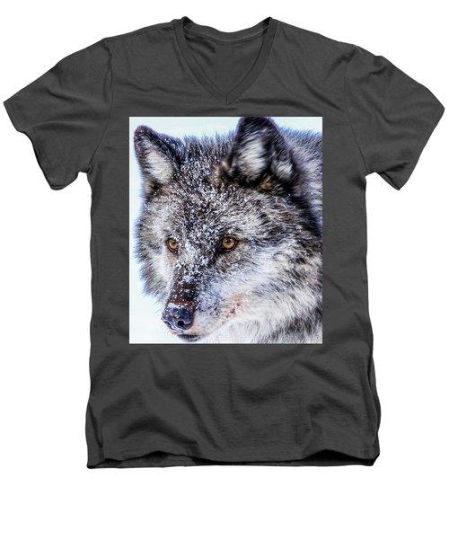 Canadian Grey Wolf In Portrait, British Columbia, Canada Men's V-Neck T-Shirt
