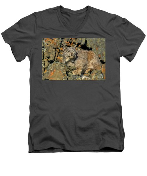 Men's V-Neck T-Shirt featuring the photograph Canadian Lynx On Lichen-covered Cliff Endangered Species by Dave Welling