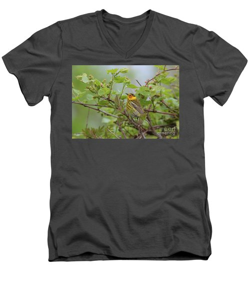 Cape May Warbler Men's V-Neck T-Shirt