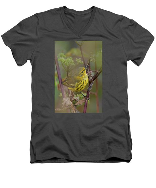 Cape May Warbler In Wees Men's V-Neck T-Shirt