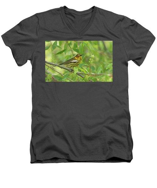 Cape May Warbler Men's V-Neck T-Shirt