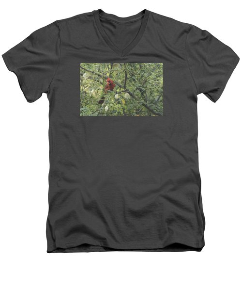 Men's V-Neck T-Shirt featuring the photograph Cardinal In Mesquite by Laura Pratt