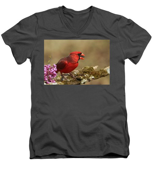Cardinal In Spring Men's V-Neck T-Shirt by Sheila Brown