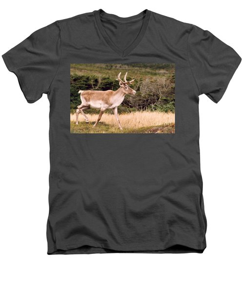 Caribou Men's V-Neck T-Shirt