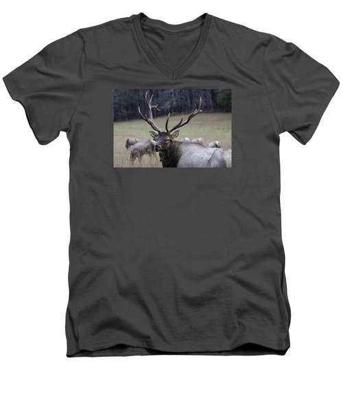 Cataloochee Elk Men's V-Neck T-Shirt
