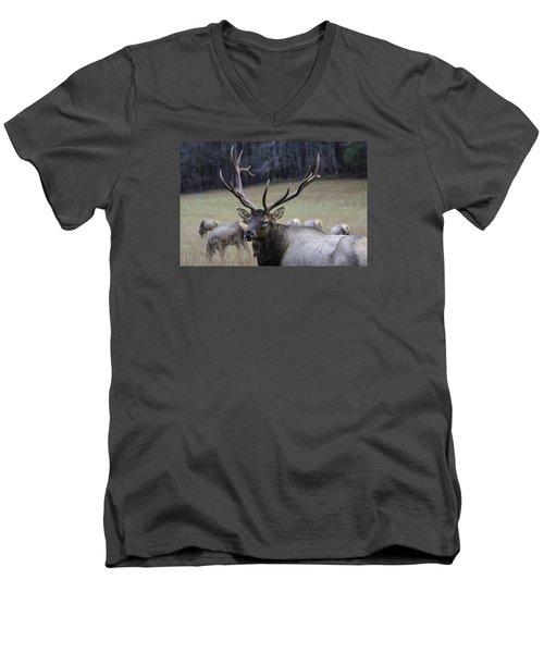 Cataloochee Elk Men's V-Neck T-Shirt