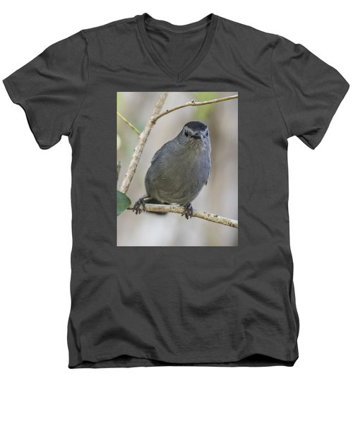 Catbird Portrait Men's V-Neck T-Shirt