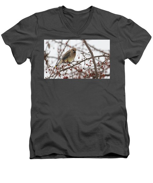 Cedar Wax Wing  Men's V-Neck T-Shirt