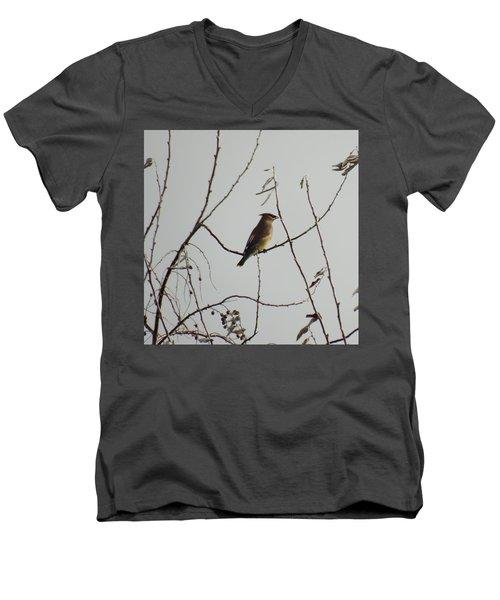 Cedar Wax Wing In Tree Men's V-Neck T-Shirt by Kenneth Willis