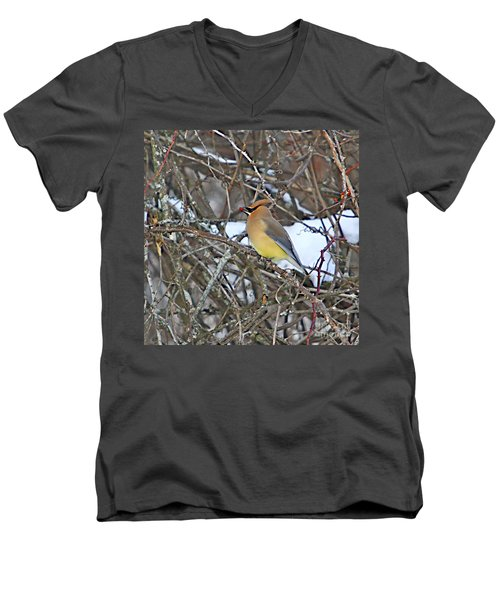 Cedar Wax Wing Men's V-Neck T-Shirt by Robert Pearson