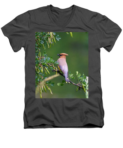 Cedar Waxwing 1 Men's V-Neck T-Shirt
