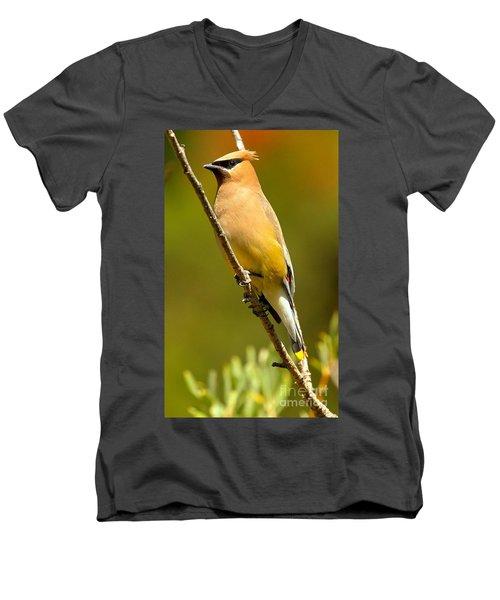Cedar Waxwing Men's V-Neck T-Shirt by Adam Jewell