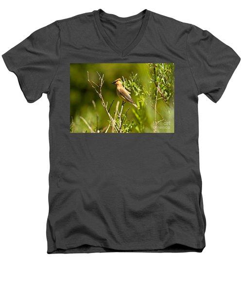 Cedar Waxwing At Glacier Men's V-Neck T-Shirt by Adam Jewell