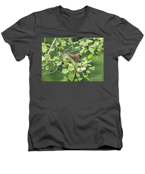 Cedar Waxwing Eating Berries Men's V-Neck T-Shirt by Maili Page