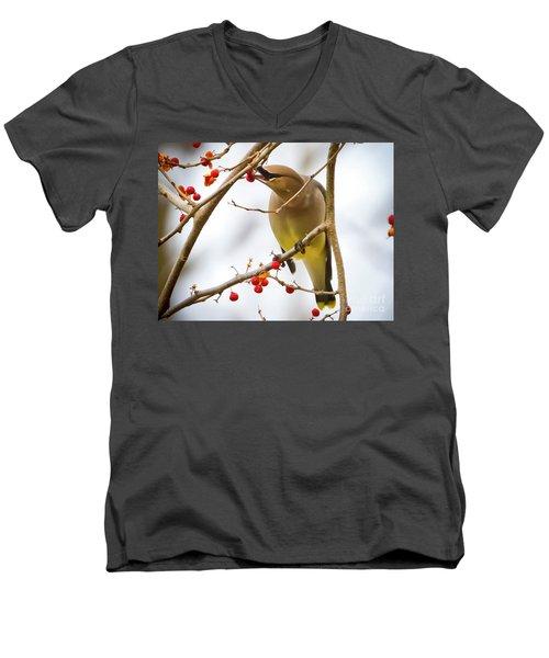 Cedar Waxwing Feeding  Men's V-Neck T-Shirt