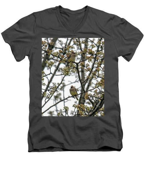 Cedar Waxwings In A Blossoming Tree Men's V-Neck T-Shirt