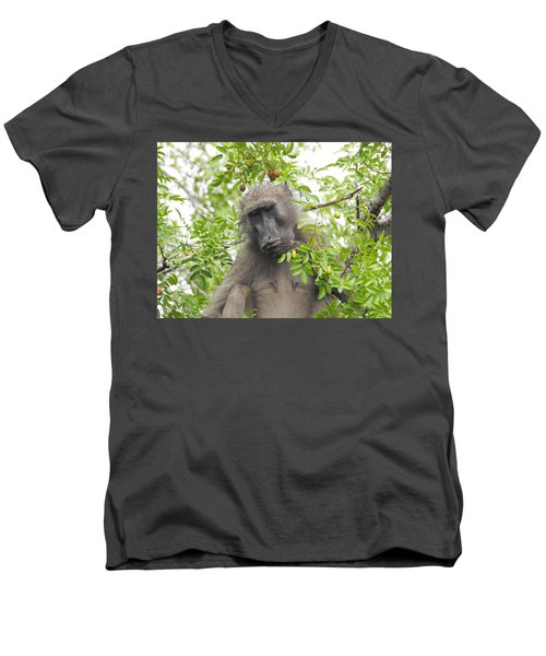 Chacma Baboon Men's V-Neck T-Shirt by Betty-Anne McDonald