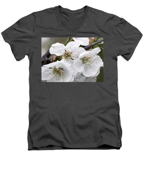 Cherry Blosoms Men's V-Neck T-Shirt
