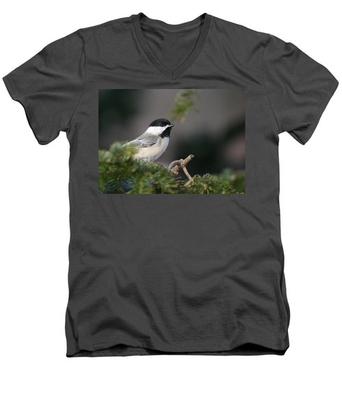Men's V-Neck T-Shirt featuring the photograph Chickadee In Balsam Tree by Susan Capuano
