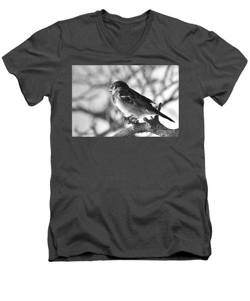 Chickadee Men's V-Neck T-Shirt