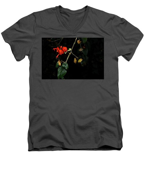 Chinese Hat Plant Men's V-Neck T-Shirt