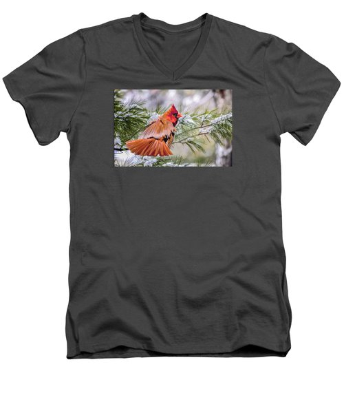 Men's V-Neck T-Shirt featuring the photograph Christmas Cardinal by Brian Tarr