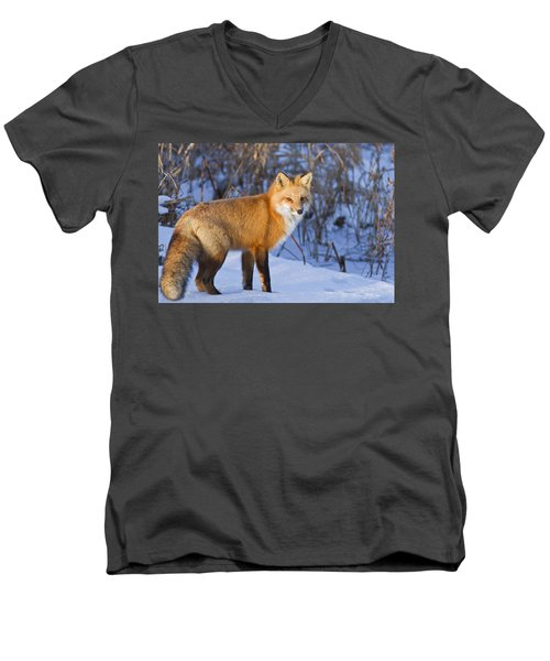 Christmas Fox Men's V-Neck T-Shirt by Mircea Costina Photography