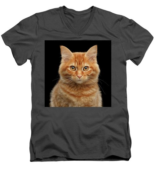 Men's V-Neck T-Shirt featuring the photograph Close-up Portrait Of Ginger Kitty On Black by Sergey Taran