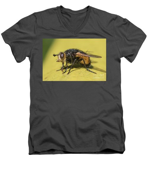 Close Up - Tachinid Fly - Nowickia Ferox Men's V-Neck T-Shirt by Jivko Nakev