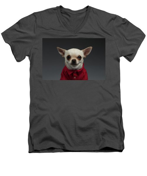 Closeup Portrait Chihuahua Dog In Stylish Clothes. Gray Background Men's V-Neck T-Shirt