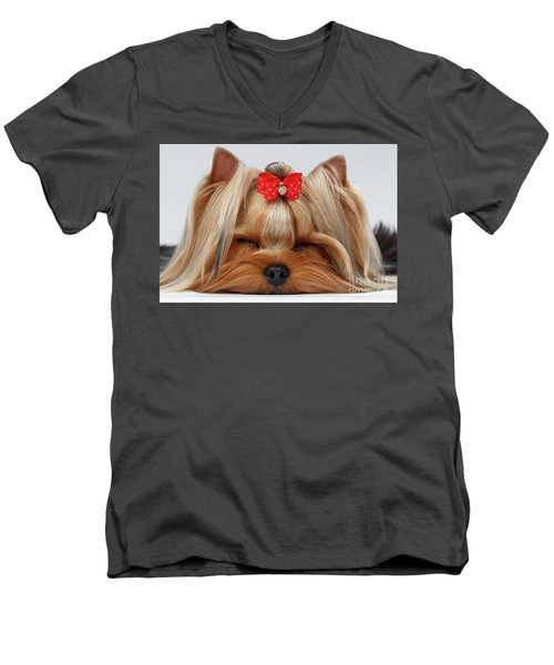 Closeup Yorkshire Terrier Dog With Closed Eyes Lying On White  Men's V-Neck T-Shirt