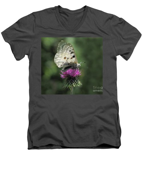 Clouded Apollo Butterfly Men's V-Neck T-Shirt by Jacqi Elmslie