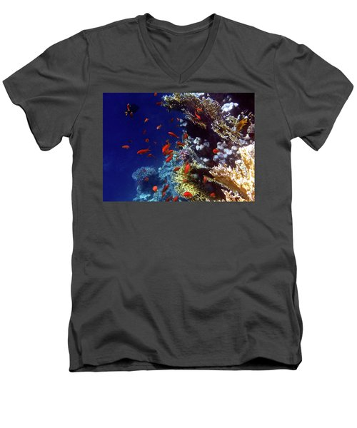 Colorful Lyretail Anthias Men's V-Neck T-Shirt