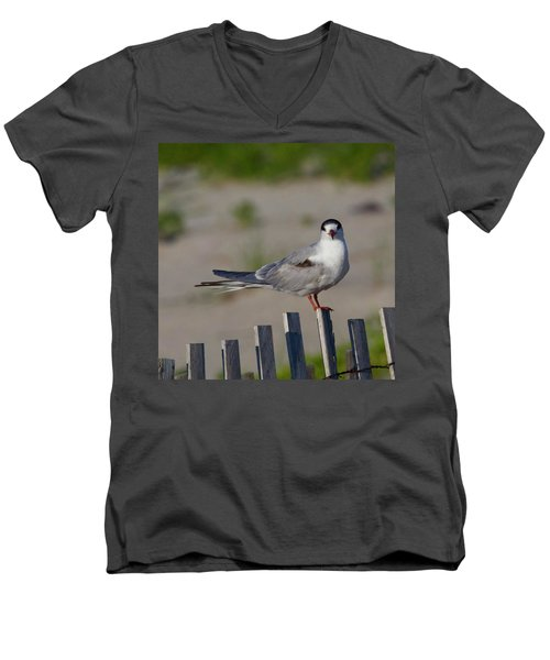 Common Tern Men's V-Neck T-Shirt