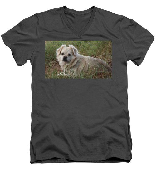 Cotton In The Grass Men's V-Neck T-Shirt