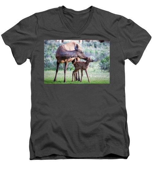 Cow And Calf Elk Men's V-Neck T-Shirt
