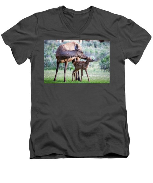 Men's V-Neck T-Shirt featuring the photograph Cow And Calf Elk by Wesley Aston