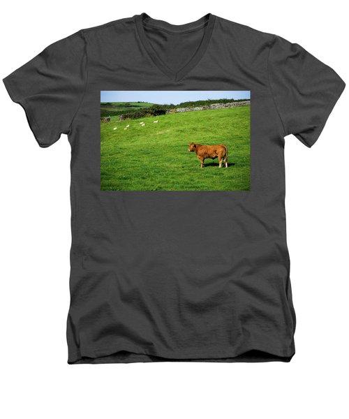 Cow In Pasture Men's V-Neck T-Shirt