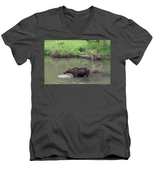 Men's V-Neck T-Shirt featuring the photograph Cow Moose And Calf by James BO Insogna