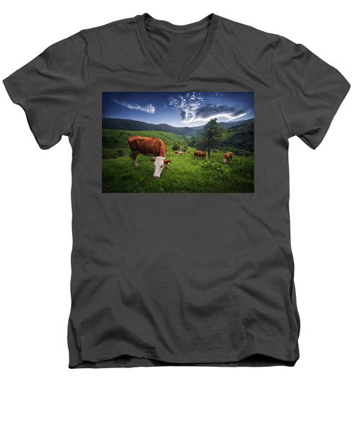 Cows Men's V-Neck T-Shirt by Bess Hamiti